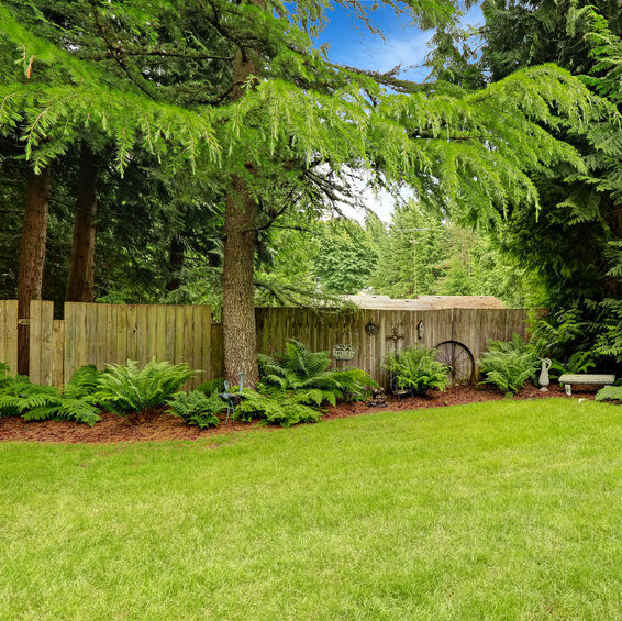 Healthy backyard with trees