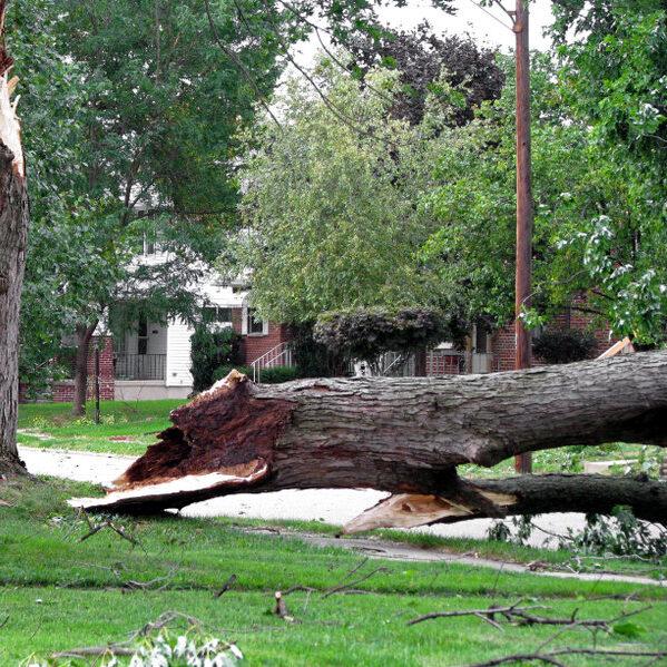 Tree fallen after storm in neighborhood